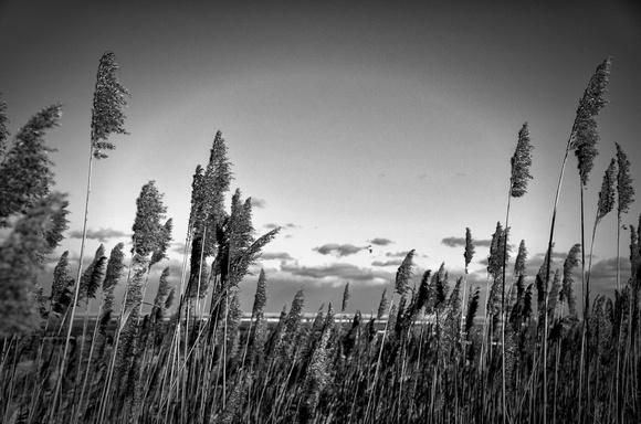 Winter Marsh at Fort Hill 100
