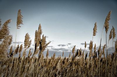 Winter Marsh at Fort Hill 60