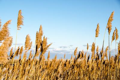 Winter Marsh at Fort Hill LR